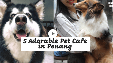 pet cafe penang