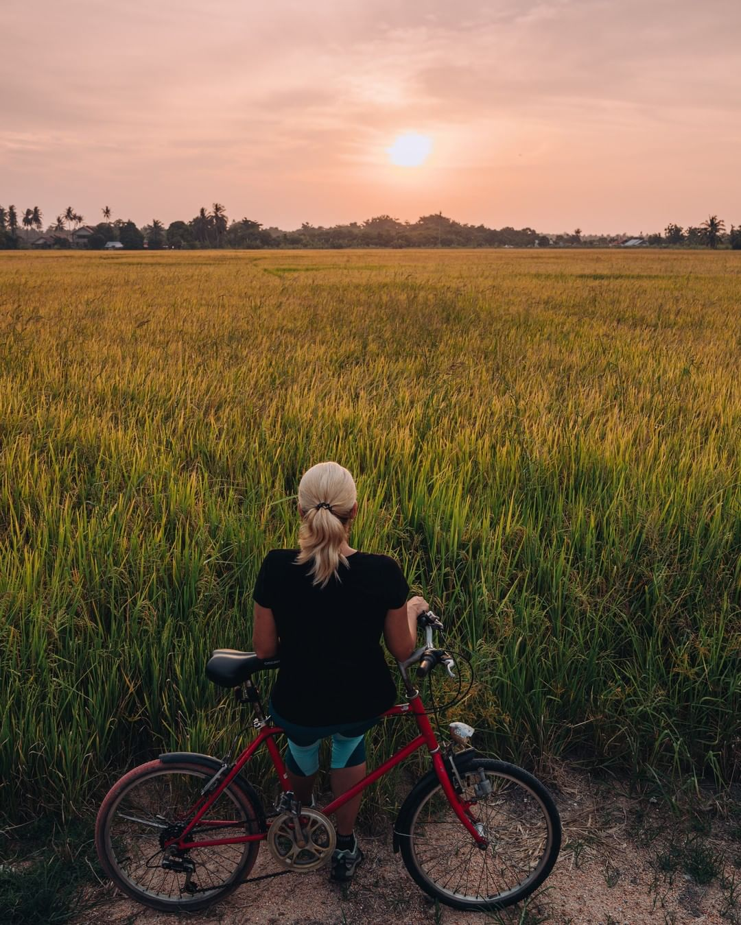 balik pulau cycling