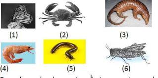 pengelompokan jenis hewan