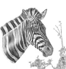 Designer Stripes