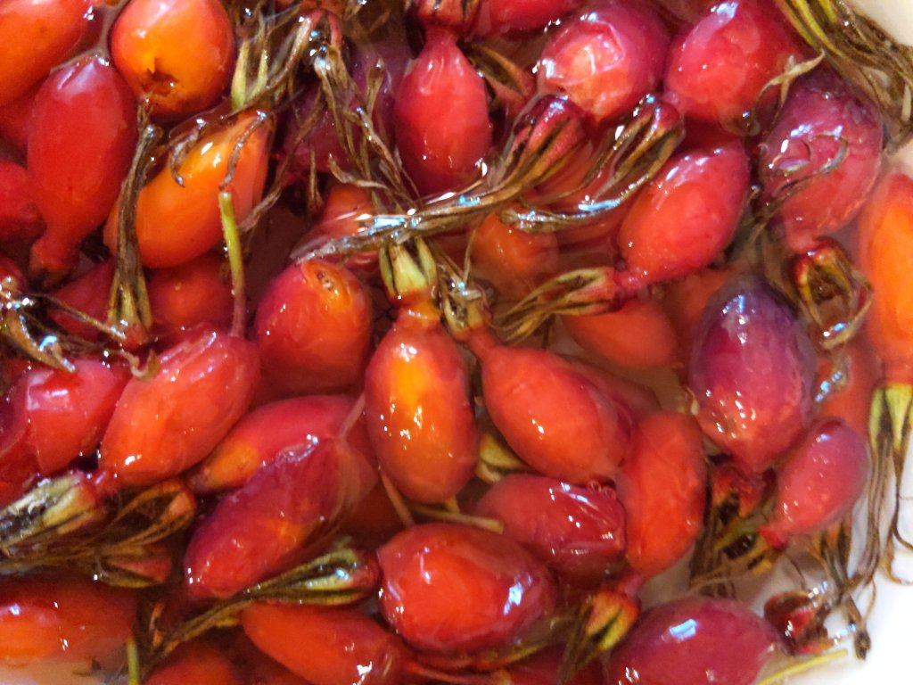 When making wild rose hip tea sort your berries well to get rid of any moldy ones or those with bugs/worms.