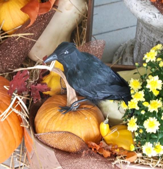 add-blackbirds