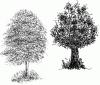 tree_pen_ink_drawing