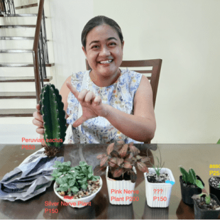 peruvian cactus and nerve plant price