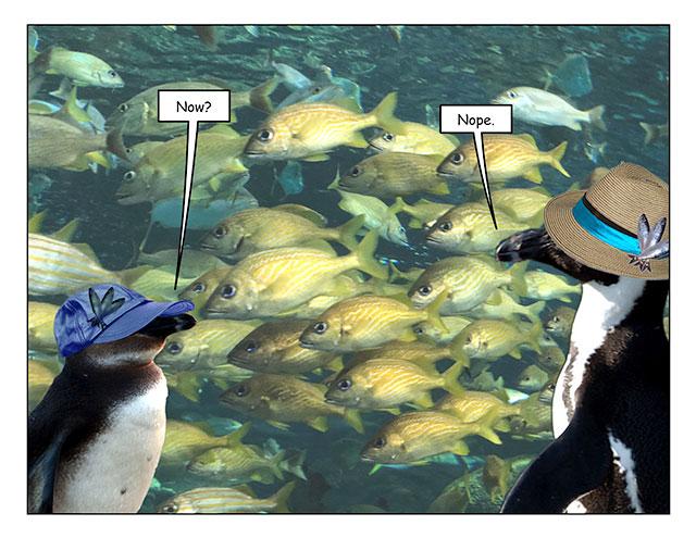 aquarinope-3.jpg