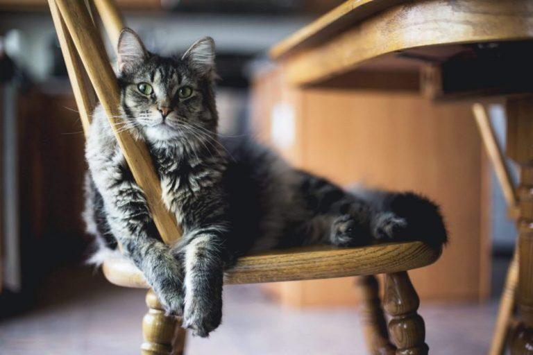 Nama Kucing Jantan Lucu