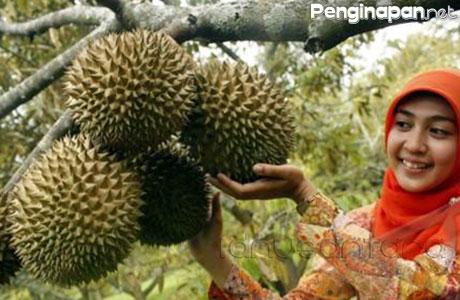 kampung durian jombang - www.idnusantara.com