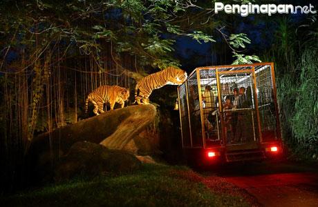 Harga Tiket Safari Night Tour Malam Hari Di Taman Safari
