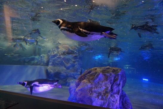 すみだ水族館のペンギンプールの写真