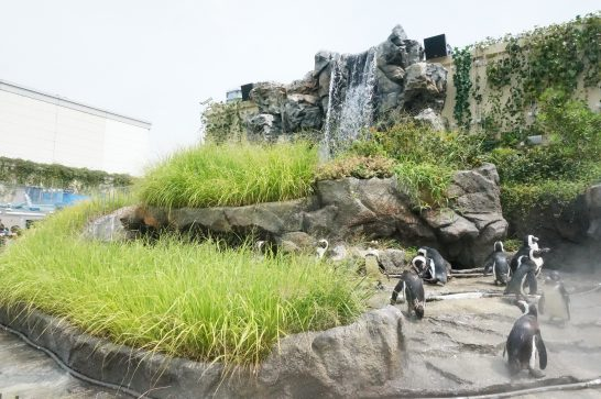 サンシャイン水族館の草原のペンギン