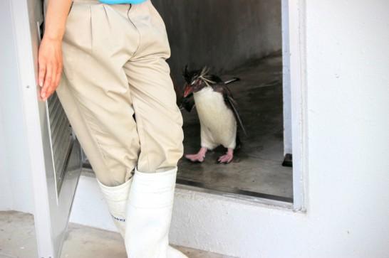 油壺マリンパークのペンギンふれあいイベント