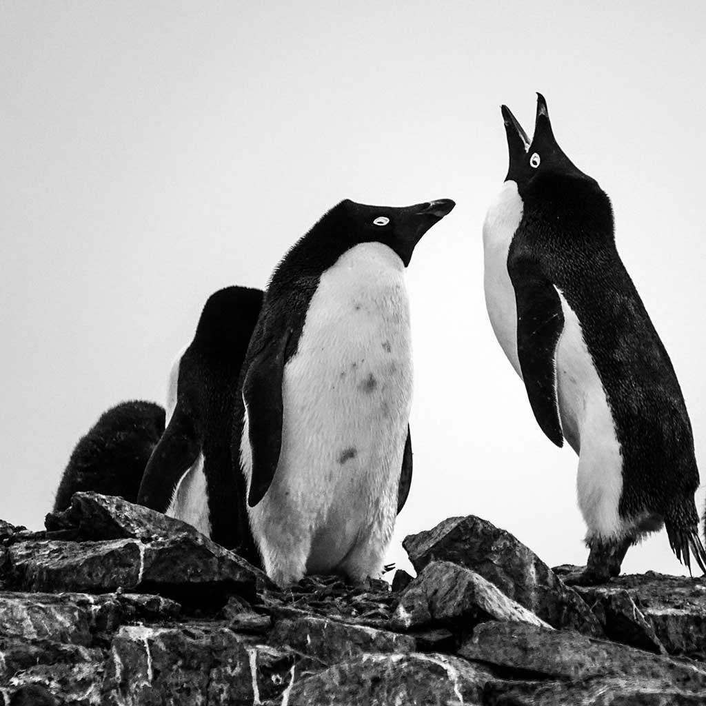 ペンギンの日2021年4月25日