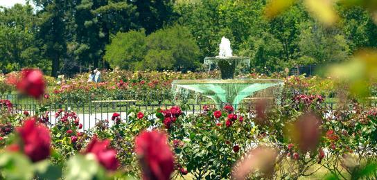 rose-garden-san-jose-inside-inspirations-3
