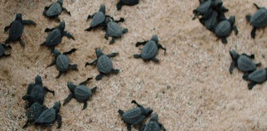 Ya intervino el Senado en el caso de la mortandad de tortugas