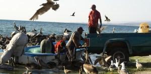 """Lo pacifico de nuestro mar se ve reflejado en la alegría que los pescadores irradian siempre en sus sonrisas y bromas """"todos nos llevamos bien, aquí no hay rivalidades, porque pa todos hay"""" aclara """"El Negro""""."""
