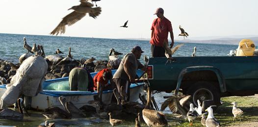 Los pescadores del malecón,  íconos de nuestra ciudad costeña