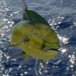 Defensores de la pesca deportiva ya se encuentran preparando una ponencia que presentarán durante su participación en el Foro que sobre Pesca Deportiva se llevará a cabo en la ciudad de Guaymas, Sonora, donde harán acto de presencia.