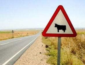 Grave tras chocar con un toro en la carretera