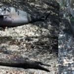 Cuatro delfines muertos, y en estado de descomposición, fueron encontrados entre los manglares de El Conchalito. Los cuerpos mostraban lesiones por dientes de delfines de mayor talla, informó la Profepa.