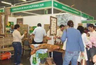Trabaja Conafor en la reactivación de la silvicultura
