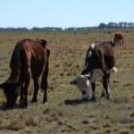 """¿Que en las """"rancherías"""" estén pasando hambre por causas de las sequías será una contingencia climática de carácter relevante?"""