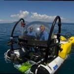 Se estudia en la UABCS una especie nueva de abanico de mar del Golfo de California.