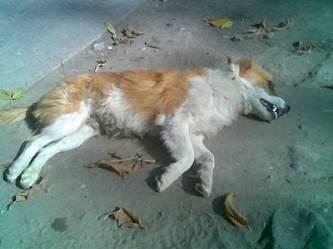 Animales atropellados en vía pública, trabajo para Servicios Públicos Municipales