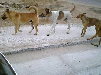 Llamado de la gente para  que sigan los trabajos de limpieza de animales callejeros con la perrera municipal y se continúen  con la  campaña de exterminio de perros callejeros.