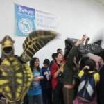 """El lema de este año es: """"Noroeste Mexicano Zona Tortuguera"""" con la participación de más de 300 miembros de las más de 40 comunidades y campamentos de tortuga marina a lo largo de estas costas."""