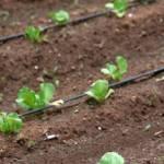 El producir hortalizas propias cuenta con beneficios personales y sociales. A nivel personal, lo más ponderable es el beneficio para la salud, pues la comida orgánica no tiene pesticidas, fertilizantes o conservadores.