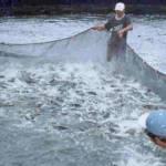 La pesca ya no es rentable, por lo que el gobierno busca capacitar a los pescadores para convertirlos en acuacultores.