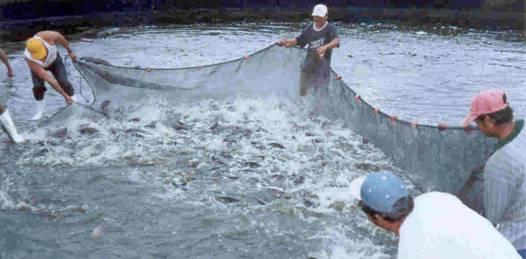 """La pesca ya no es rentable, """"la acuacultura es una realidad en BCS"""""""
