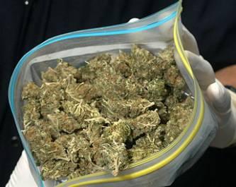 Aseguran PGJE y SEDENA más de mil 900 dosis de marihuana