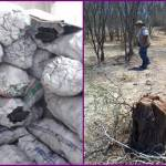 Este es el segundo operativo en menos de una semana en que la procuraduría decomisa fuertes cantidades de carbón vegetal de mezquite (prosopis articulata) de procedencia ilegal.