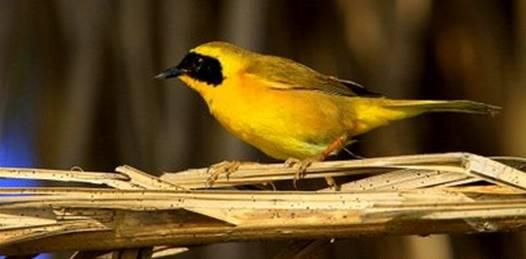 Invitan a participar en curso de avistamiento de aves