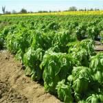 Noel Roberto Romero Nájera, egresado de la carrera de Administración de Agronegocios de la UABCS, realizó una investigación sobre los costos energéticos en la agricultura.