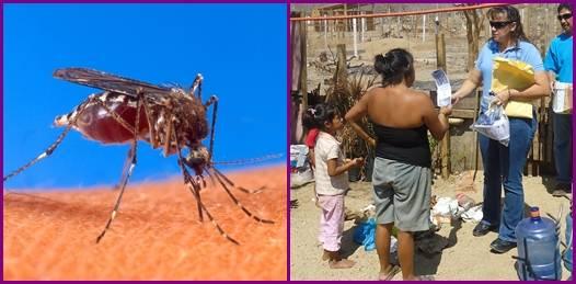 BCS preparado contra el dengue y las enfermedades gastrointestinales