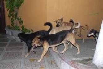 Continua la campaña de exterminio de perros callejeros