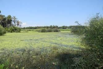 Buscarán que el Estero San José recupere su esplendor