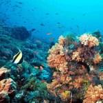 Creado en el 2009 el Observatorio Cousteau tendrá su primera sede en el Centro de Investigaciones Biológicas del Noroeste (CIBNOR), de La Paz y ha sido celebrado como una iniciativa que para frenar el deterioro ambiental, con base en información de tipo científico, especialistas mexicanos y franceses que participan en la iniciativa.