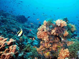 Consolidan acuerdo para desplegar observatorio Cousteau en La Paz