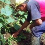 El funcionario estatal aseguró que ha encontrado gente armada que impide la entrada esos campos agrícolas a personas del gobierno o a investigadores que busquen conocer las condiciones de vida en que viven estos trabajadores.
