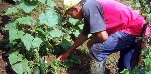 Sabe el gobierno de las condiciones de maltrato en campos agrícolas