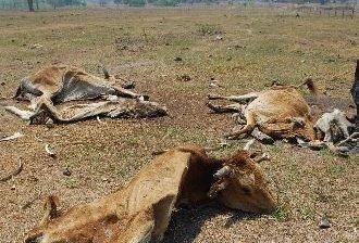 Se duplicará el número de afectados por la sequía