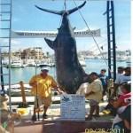 Sáenz Smith agregó que, durante los últimos meses, se ha reportado una baja en la actividad hasta del 68%, sin dejar de precisar la falta de presencia de especies como el dorado, ante lo que lanzó un llamado a los sectores gubernamentales a fortalecer la promoción de la pesca deportiva.