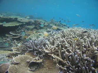 Algunos investigadores señalan que nuestra entidad presenta varias vulnerabilidades en cuanto a los impactos del cambio climático, como la elevación del nivel del mar, recursos hídricos, desertificación; así como la acidificación del océano, que disminuye la sobrevivencia de las larvas de peces e invertebrados, y además debilita los esqueletos de especies clave como corales, moluscos o erizos de mar, dejándolos más expuestos a sus depredadores.