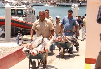Donan al DIF pescado decomisado por la Secretaría de Marina