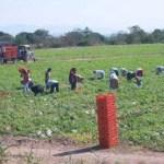 campos agricolas
