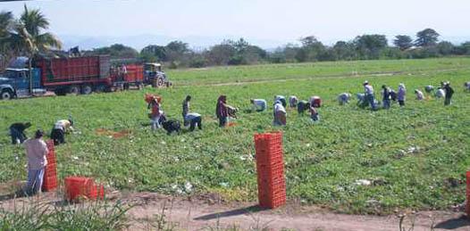 Investigarán PGR y CEDH «si hay trata de personas» en campos agrícolas
