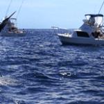 torneo de Pesca Guaymas